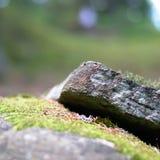 Szczegół skała z mech na nim Zdjęcia Royalty Free