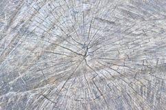 Szczegół stary starzejący się drzewo Fotografia Royalty Free