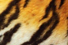 Szczegół tygrysi futerko fotografia stock