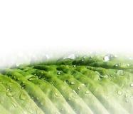 Szczegół zieleni liście Zdjęcie Royalty Free