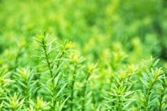 Szczegółowa fotografia żywa zielona roślina, naturalna scena Obrazy Royalty Free