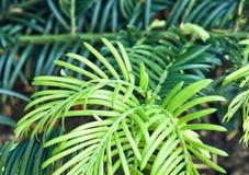 Szczegółowa fotografia zielona roślina, naturalna scena Obrazy Stock