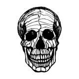Szczegółowa pociągany ręcznie ilustracja czaszka Grunge wietrzejąca ilustracja Zdjęcia Royalty Free