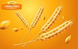 Szczegółowi pszeniczni ucho, owsy lub jęczmień odizolowywający na żółtym tle, Naturalny składnika element Zdrowy jedzenie lub Zdjęcie Royalty Free