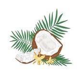 Szczegółowy botaniczny rysunek krakingowy koks, drzewko palmowe opuszcza na białym tle i kwiaty odizolowywający Jadalny świeży ilustracji