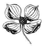 szczegółowy nakreślenie kwiat obraz stock