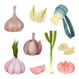 Szczegółowy płaski wektorowy ustawiający czosnek ikony Korzenny condiment Aromatyczny kulinarny składnik Żywność organiczna Natur ilustracji