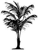 szczegółowy palma royalty ilustracja