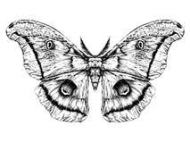 Szczegółowy realistyczny nakreślenie motyl, ćma/ Zdjęcia Stock