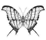 Szczegółowy realistyczny nakreślenie motyl Obraz Royalty Free