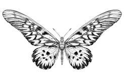 Szczegółowy realistyczny nakreślenie motyl Zdjęcia Stock
