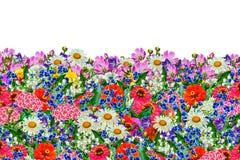 szczegółowy rysunek kwiecisty pochodzenie wektora Zdjęcie Royalty Free