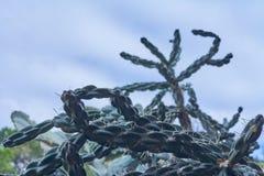 Szczegółowy widok kaktus z niebem w funduszu zdjęcia stock