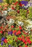 Szczegółowy widok ogród z różnorodnymi kwiatami zdjęcia stock