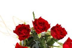 szczegółu czerwieni róże Zdjęcie Stock