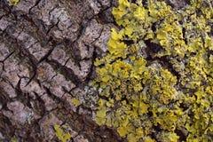szczegółu drzewo Obrazy Royalty Free