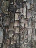 szczegółu drzewo Natury tła drewniana tapeta Zdjęcia Royalty Free