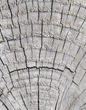 szczegółu końcówka drewno Obrazy Stock