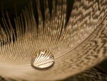 szczegółu kropli piórka macro wody biel zdjęcie royalty free