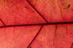 Szczegółu liść Fotografia Stock