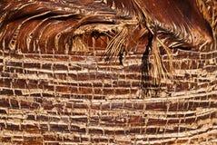 szczegółu palmy bagażnik Zdjęcie Royalty Free