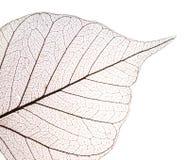 szczegółu sucha liść tekstura Zdjęcia Stock