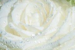 Szczegóły biały kwiat z wodnym kropli zbliżeniem Obrazy Royalty Free