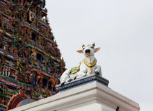 Szczegóły hindusa Kapaleeswarar świątynia, Chennai, India Obrazy Royalty Free
