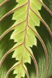 Szczegóły liść Zdjęcie Stock