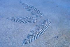 Szczegóły liść imprinted na brąz barwiącej cement ziemi Obraz Royalty Free