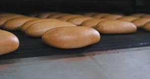 Szczegóły linii i konwejeru zbliżenie automatyzujący piekarniany chleb wydostają się od paska, nowożytna maszyna w piekarni fabry zbiory wideo
