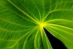 szczegóły zielone liści Fotografia Royalty Free
