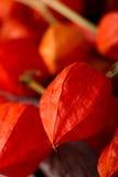 Szczegół agrestowy kwiat z inny Fotografia Royalty Free