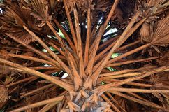Szczegół drzewko palmowe, Srí Lanka Fotografia Stock