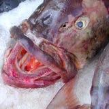 Szczegół grouper ryba Zdjęcia Royalty Free