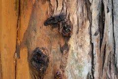 Szczegółowa powierzchnia drzewo fotografia royalty free