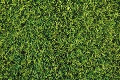 szczegółowa trawa wysoka Obrazy Royalty Free