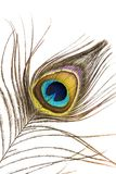 Szczegół pawia piórko Fotografia Stock