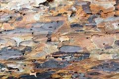Szczegół sosny barkentyna Obrazy Stock