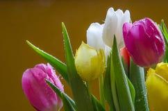 Szczegół tulipanu bukiet Obraz Stock