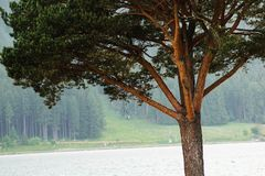 Szczegółu barwiony drzewo przy jeziorem Zdjęcia Stock