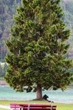 Szczegółu barwiony drzewo przy jeziorem Zdjęcia Royalty Free