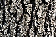 szczegółu drzewo Fotografia Stock