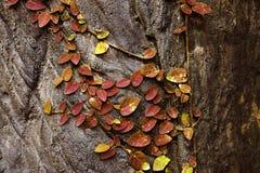 szczegółu drzewo Obraz Royalty Free