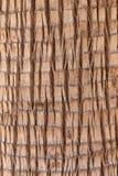 szczegółu drzewo Zdjęcie Royalty Free