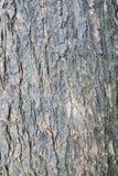 szczegółu drzewo Obrazy Stock