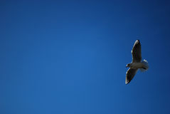 szczegółu ptasi niebo Zdjęcie Stock