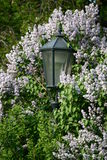 szczegółu wiosna vysehrad zdjęcia stock