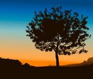 Szczegółu wysoki Drzewo Obrazy Stock