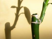 szczegóły bambusowy Obrazy Royalty Free